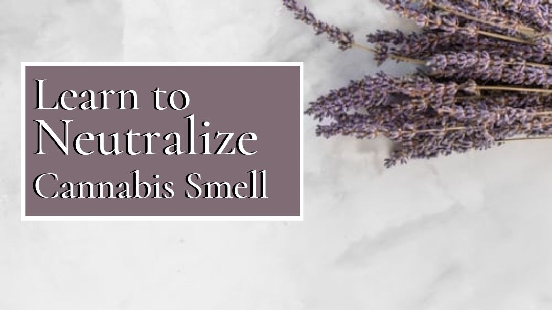 Get Rid Of The Smell Of Cannabis With The Help Of These Tips
