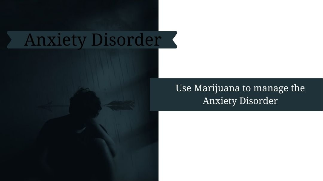 understand how medical marijuana can act as a medicine to deal with anxiety