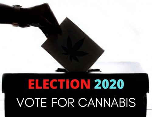 Is Cannabis a Winner in The 2020 Elections? Here's What Cannabis Doctors Says