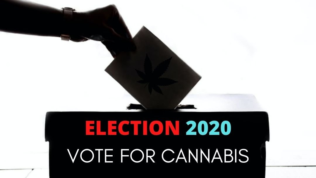 Why Cannabis Doctors Feel Cannabis Won The 2020 Elections?